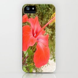 Beautiful Red Hibiscus Flower With Garden Background iPhone Case