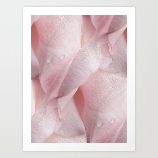 Tears Of A Rose Art Print