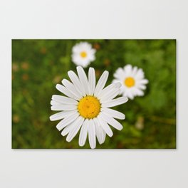 Three is the Magic Number Canvas Print