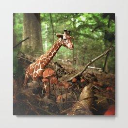 Appalachian Wonderland No. 1 Metal Print