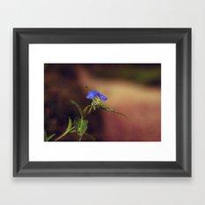Little Beauty Framed Art Print