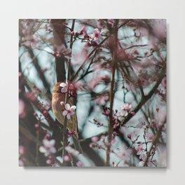 Peek-A-Boo - Spring Finch Metal Print