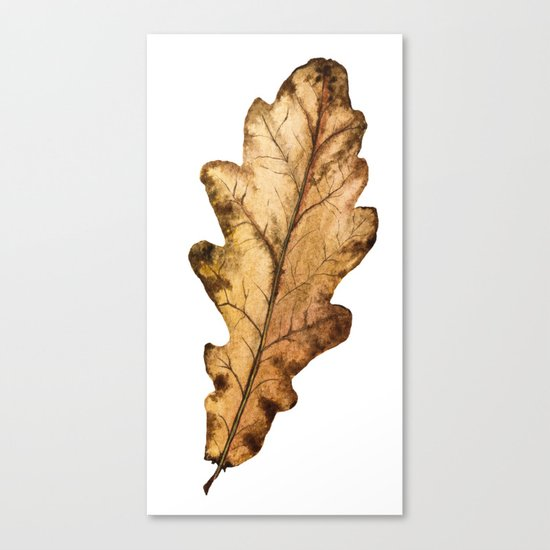 Autumn Leaf 01 Canvas Print