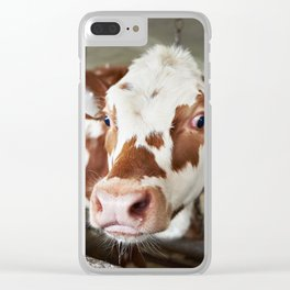 Calf in stalls at farm Clear iPhone Case