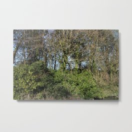 Canal Bank in Early Spring Metal Print