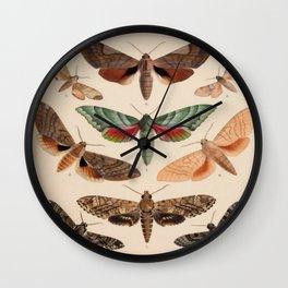 Vintage Natural History Moths Wall Clock