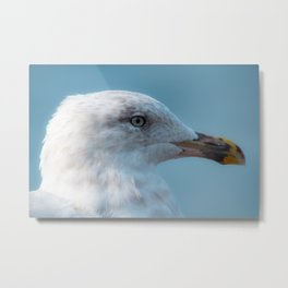 Shorebird in close-up Metal Print
