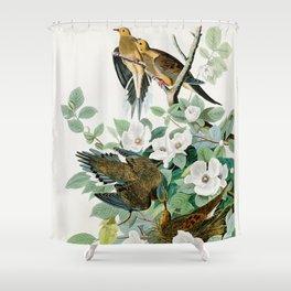 Carolina Turtle Dove, Birds of America by John James Audubon Shower Curtain