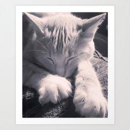 Sleepy Time Cat Art Print