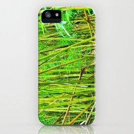 Bamboo Forrest, Maui Hawaii iPhone Case