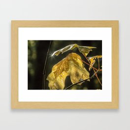 Touched by Light Framed Art Print
