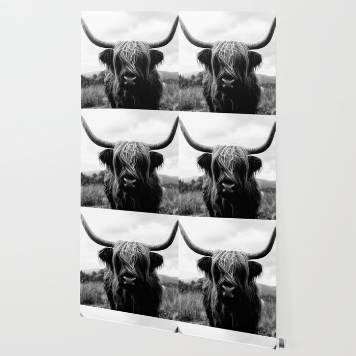 Scottish Highland Cattle Black and White Animal Wallpaper