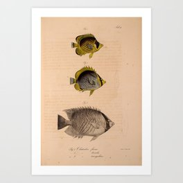 Vintage Print - Atlas of a Journey in North Africa (1828) - Butterflyfish Art Print