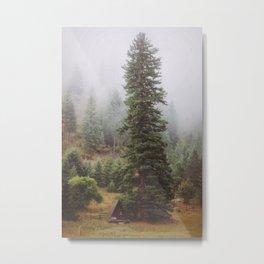 Towering Tree Metal Print