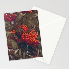 mountain ash berries autumn branches Stationery Cards