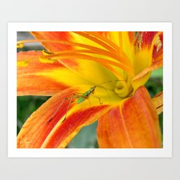 Into the Lilly Art Print