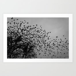 STARLINGS IN THE CITY Art Print