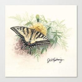 Swallowtail Study Canvas Print