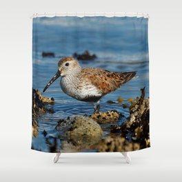 Bird on the Beach / A Solitary Dunlin Shower Curtain