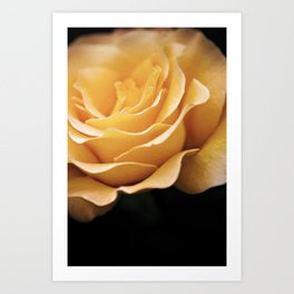 Lady Rowena- Golden Rose  Art Print