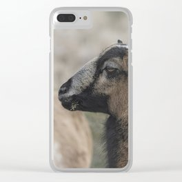 Barbados Blackbelly Sheep Profile Clear iPhone Case