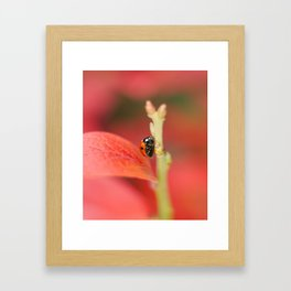 Ladybug On An Autumn Leaf Framed Art Print