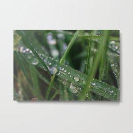 Grass Macro Metal Print