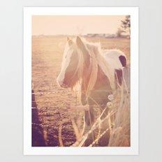 Horse in Springtime Sun Art Print