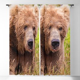 Brown Bear Kodiak Blackout Curtain