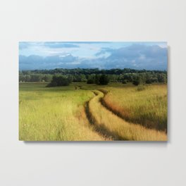 Path through Grassland Metal Print