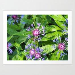 Bright fresh summer flowers Art Print