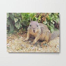 Beach Squirrel Metal Print