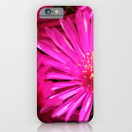 Ice Plant Pink Cactus Flowers iPhone Case