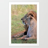 lions Art Prints featuring Lions by Jessica Krzywicki