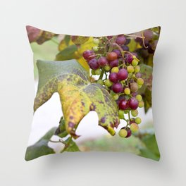 Green and purple grapes on the vine Throw Pillow