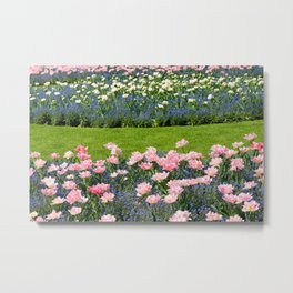 Pink Foxtrot tulips with blue forget-me-nots mix Metal Print