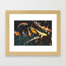 Koi Swarm Framed Art Print