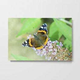 Butterfly VIII Metal Print