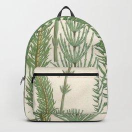 Botanical Horsetail Plants Backpack