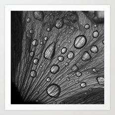 water drops macro XI Art Print