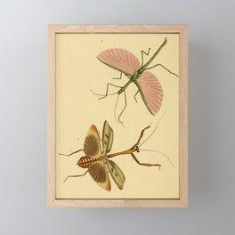 Naturalist Stick Bugs Framed Mini Art Print
