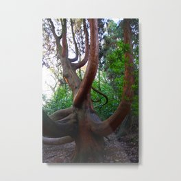 Giant Willow Metal Print