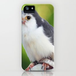 Pygmy Falcon iPhone Case