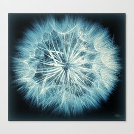 Radiant Dandy Canvas Print