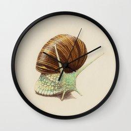 Snail Two Wall Clock