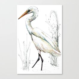 Mr Kotuku , New Zealand White Heron Canvas Print
