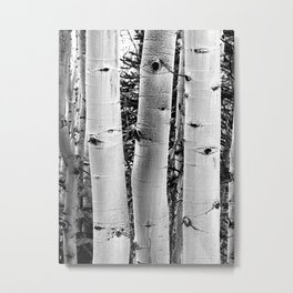 Three Aspens Black & White Metal Print