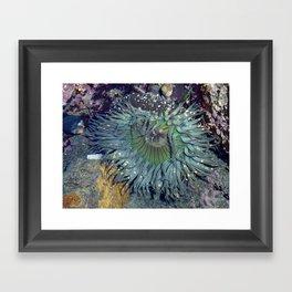 Sea Anemone  Framed Art Print