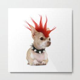 Punk Chihuahua Metal Print