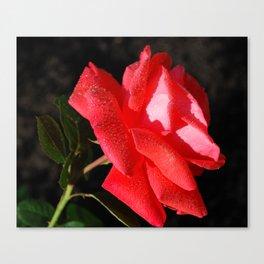 Evening Tropicana Rose Canvas Print